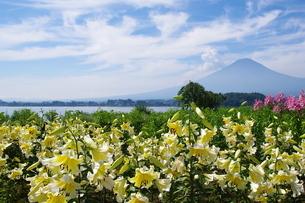 大石公園 日本 山梨県 富士河口湖町の写真素材 [FYI04287263]