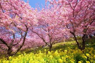 松田山 日本 神奈川県 松田町の写真素材 [FYI04287269]