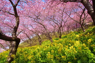 松田山 日本 神奈川県 松田町の写真素材 [FYI04287270]