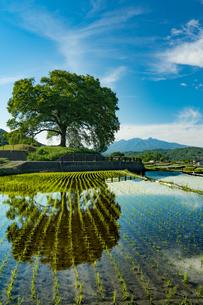 わに塚の桜 日本 山梨県 韮崎市の写真素材 [FYI04287333]
