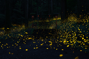 二岡神社 日本 静岡県 御殿場市の写真素材 [FYI04287364]