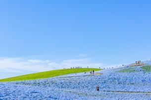 国営ひたち海浜公園 日本 茨城県 ひたちなか市の写真素材 [FYI04287373]