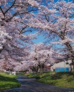 観音寺川 日本 福島県 猪苗代町の写真素材 [FYI04287393]