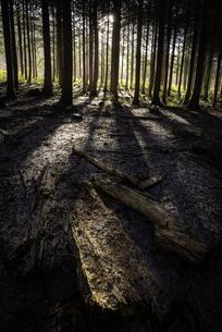 赤城山道中の林での朝の写真素材 [FYI04287394]