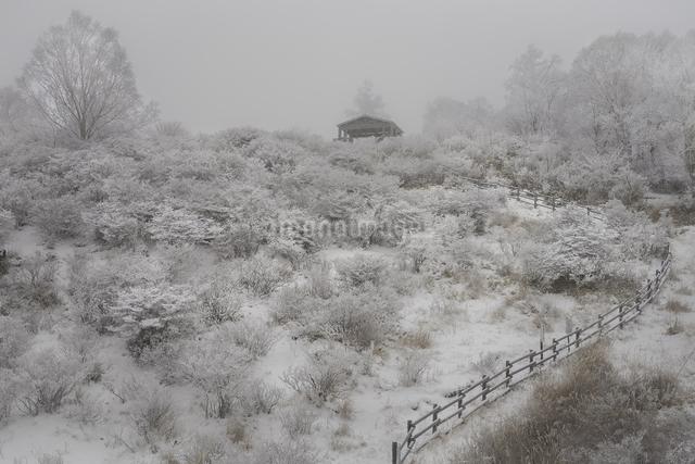 霧氷の写真素材 [FYI04287407]