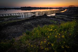 多々良沼の夕焼けの写真素材 [FYI04287413]
