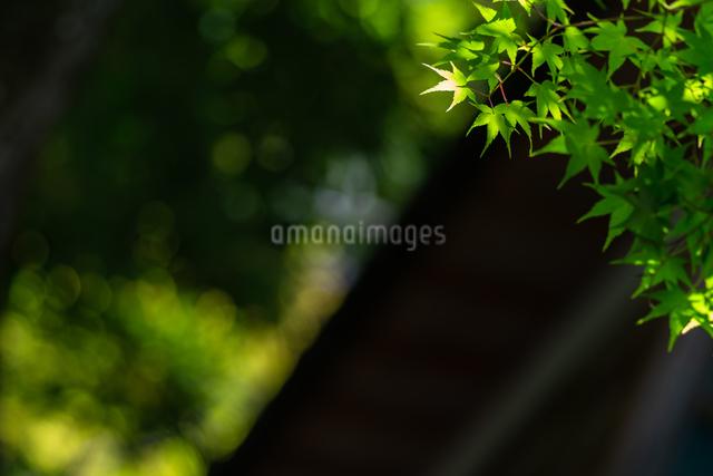 三瀧寺 日本 広島県 広島市 西区の写真素材 [FYI04287429]