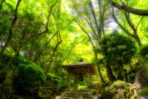 三瀧寺 日本 広島県 広島市 西区の写真素材 [FYI04287430]
