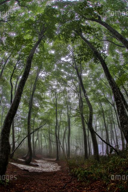 上光が原高原 日本 新潟県 上越市の写真素材 [FYI04287477]