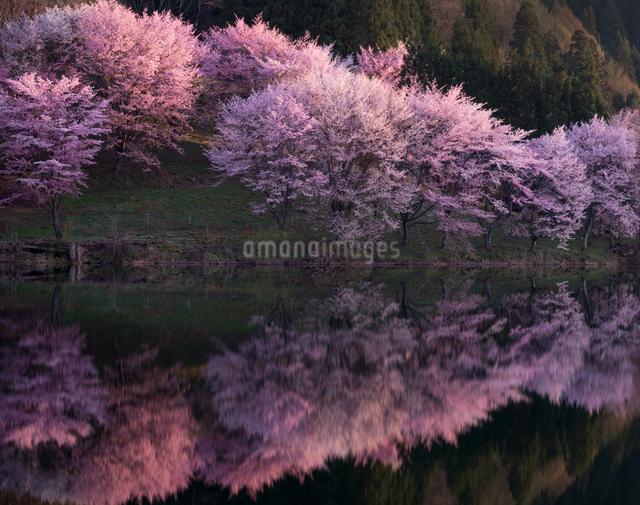 中綱湖 日本 長野県 大町市の写真素材 [FYI04287487]