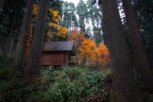 秋 森林の写真素材 [FYI04287498]