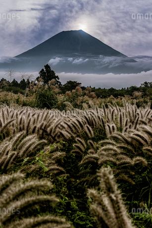 富士山の写真素材 [FYI04287526]
