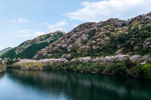 桜の写真素材 [FYI04287547]