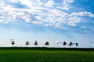 メルヘンの丘 日本 北海道 大空町の写真素材 [FYI04287554]