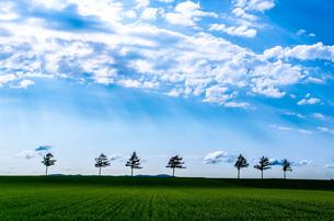 メルヘンの丘 日本 北海道 大空町の写真素材 [FYI04287559]
