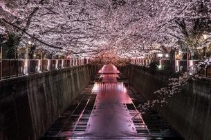 目黒川 日本 東京都 目黒区の写真素材 [FYI04287590]