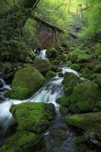 油木美林遊歩道 日本 長野県 木曽町の写真素材 [FYI04287602]