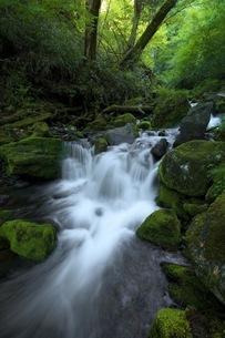 油木美林遊歩道 日本 長野県 木曽町の写真素材 [FYI04287604]
