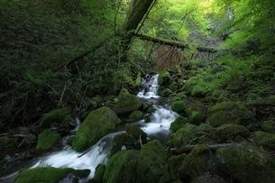油木美林遊歩道 日本 長野県 木曽町の写真素材 [FYI04287608]