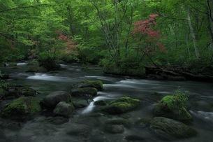 奥入瀬渓流 日本 青森県 十和田市の写真素材 [FYI04287615]