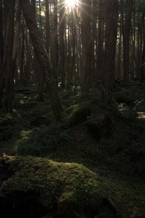 白駒池 日本 長野県 佐久穂町の写真素材 [FYI04287624]