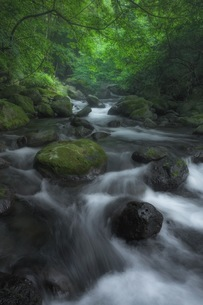 尚仁沢湧水 日本 栃木県 塩谷町の写真素材 [FYI04287637]