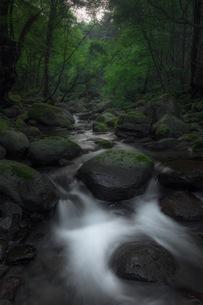 尚仁沢湧水 日本 栃木県 塩谷町の写真素材 [FYI04287638]