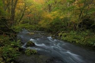 奥入瀬渓流 日本 青森県 十和田市の写真素材 [FYI04287672]