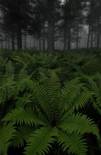 霧ヶ峰の写真素材 [FYI04287699]