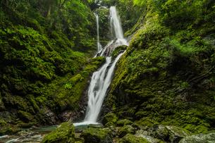 雨乞いの滝 日本 徳島県 神山町の写真素材 [FYI04287783]