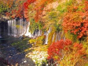 白糸の滝 日本 静岡県 富士宮市の写真素材 [FYI04287788]
