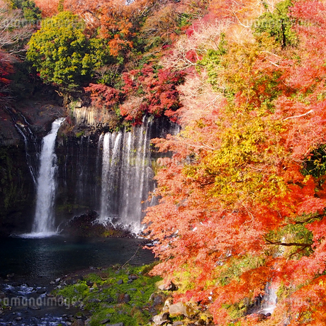 白糸の滝 日本 静岡県 富士宮市の写真素材 [FYI04287789]