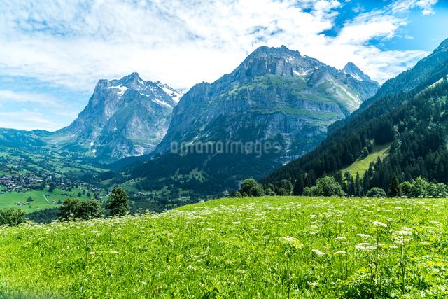 グルント スイスの写真素材 [FYI04287798]