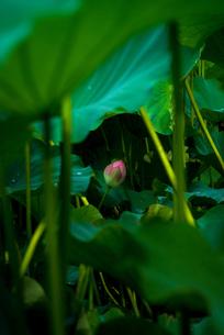 鹿央古代の森公園 日本 熊本県 山鹿市の写真素材 [FYI04287848]