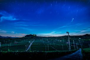八女中央大茶園 日本 福岡県 八女市の写真素材 [FYI04287854]