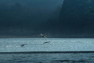 志高湖キャンプ場 日本 大分県 別府市の写真素材 [FYI04287887]