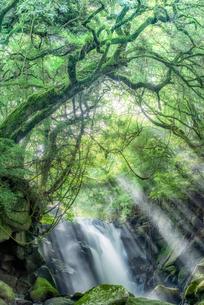 夫婦滝 日本 熊本県 南小国町の写真素材 [FYI04287972]