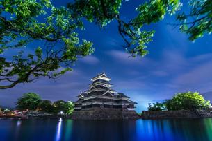松本城 お堀わきの梅の樹の下 日本 長野県 松本市の写真素材 [FYI04287973]