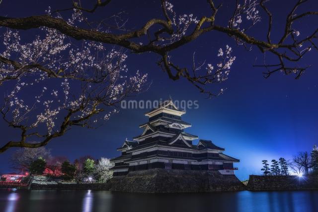 松本城 お堀わきの梅の樹の下 日本 長野県 松本市の写真素材 [FYI04287991]