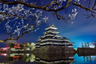 松本城 お堀わきの梅の樹の下 日本 長野県 松本市の写真素材 [FYI04287992]