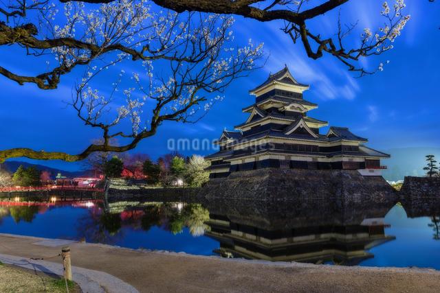 松本城 お堀わきの梅の樹の下 日本 長野県 松本市の写真素材 [FYI04287993]