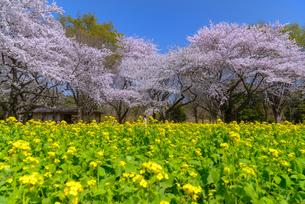昭和記念公園 日本 東京都 昭島市の写真素材 [FYI04288016]