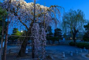 松本城 日本 長野県 松本市の写真素材 [FYI04288019]