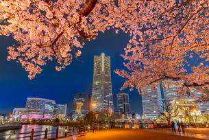 桜 夜景 日本の写真素材 [FYI04288027]