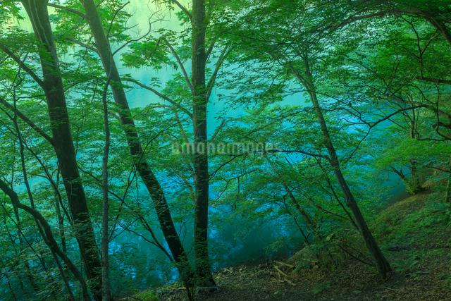 島々谷林道 砂防ダム 日本 長野県 松本市の写真素材 [FYI04288035]