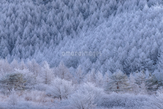 高ボッチ山 日本 長野県 岡谷市の写真素材 [FYI04288056]
