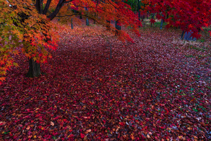 信州スカイパーク 日本 長野県 松本市の写真素材 [FYI04288060]
