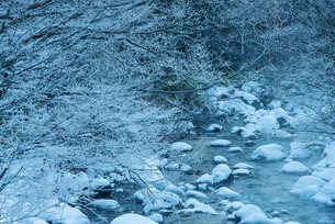 乗鞍高原 日本 長野県 松本市の写真素材 [FYI04288061]