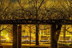 国営昭和記念公園 日本 東京都 立川市の写真素材 [FYI04288062]