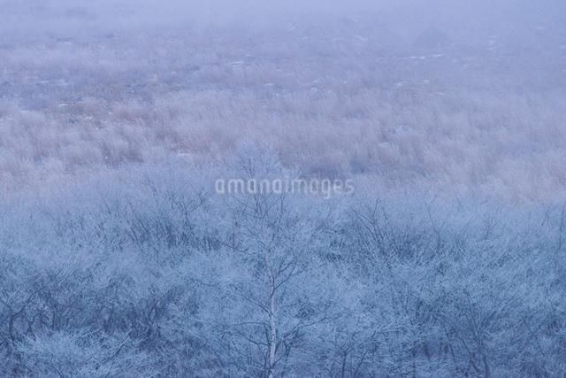 霧ヶ峰の写真素材 [FYI04288063]
